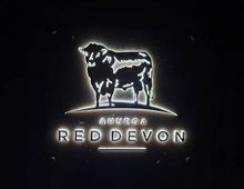 Ahuroa Red Devon Identity